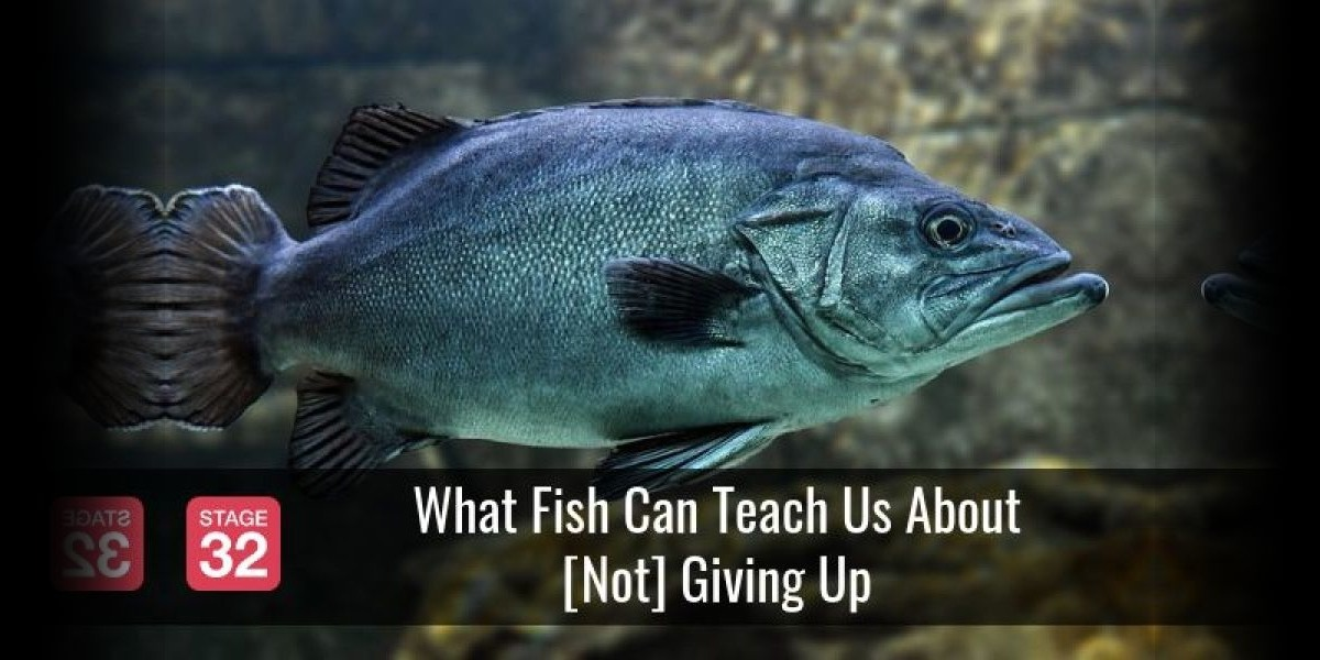 What Fish Can Teach Us About [Not] Giving Up