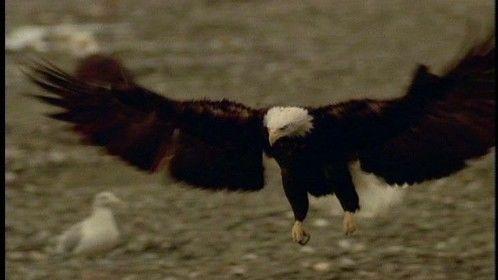 Eagle Lands AK