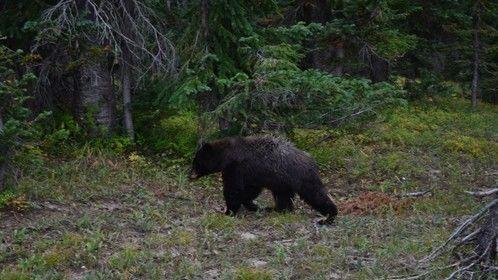 Black bear visit Colorado