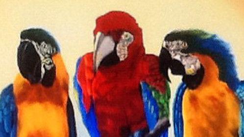 The Three Macaws