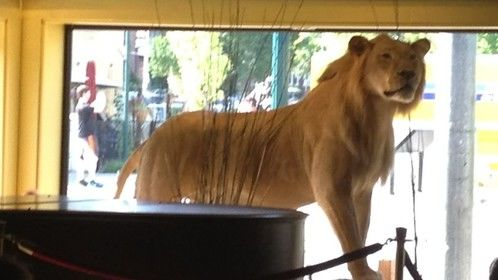 Stuffed Lion at the Blueberry Hill Restaurant in St. Louis Missouri.  What a super interesting place!