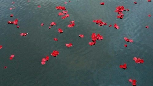 Roses On The Lake - our new screenplay!  Working to get it produced now.