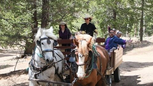 Mountain Driving With a Team of Draft Horses