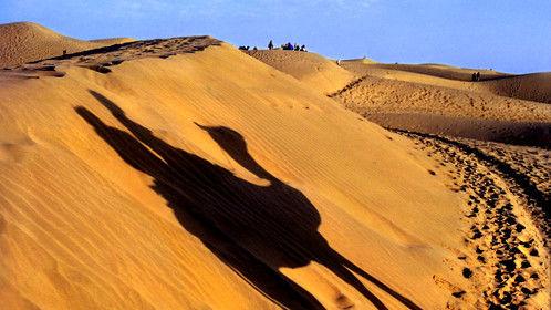 Camel Shadow Shot in the Thar Desert whilst in Rajastan, India.