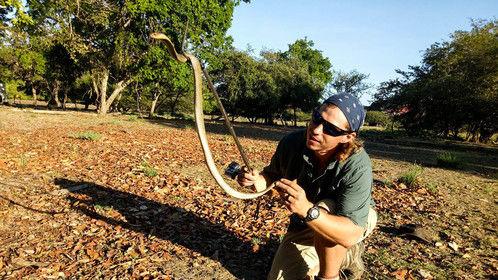 Wrangling a Spitting Cobra