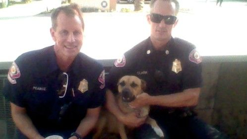 they are from the los angeles fire department fire engine 32 they love brownie