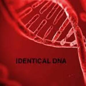 Identical DNA