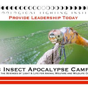 Inhumanities: Insect Apocalypse