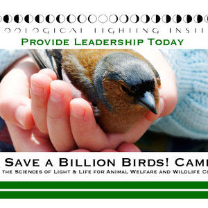 Inhumanities: Save a Billion Birds!