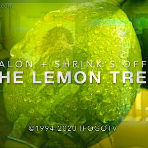 The Lemon Tree - Sitcom Pilot