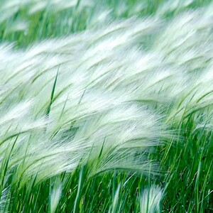 SEED IN THE WIND