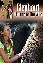 Elephant, Return to the Wild