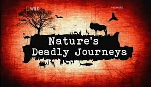 Nature's Deadly Journeys
