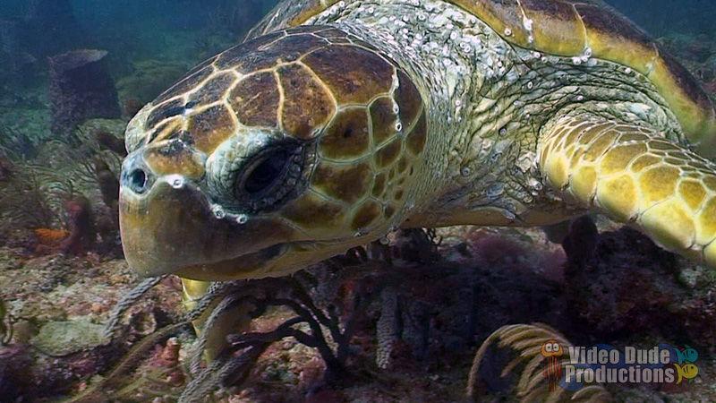 Sea Turtle Research Trip