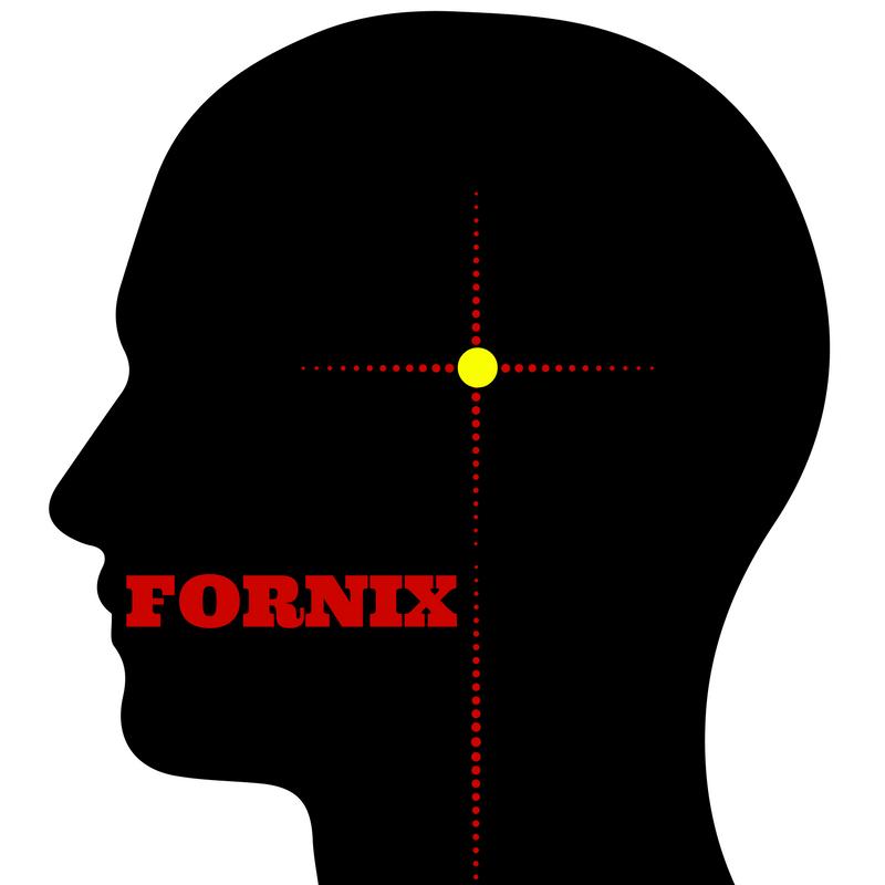 Fornix