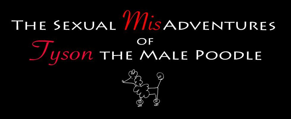 The Sexual MisAdventures of Tyson the Male Poodle