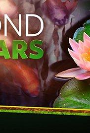Pond Stars