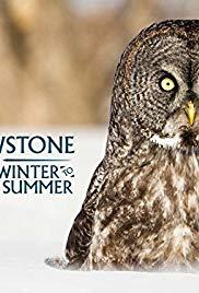 Yellowstone: Wildest Winter to Blazing Summer