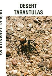 Desert Tarantulas