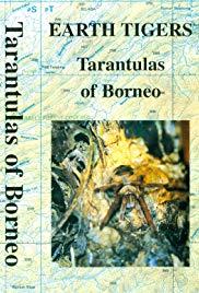 Earth Tigers - Tarantulas of Borneo